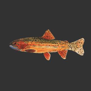 Fishpond Cutthroat Sticker