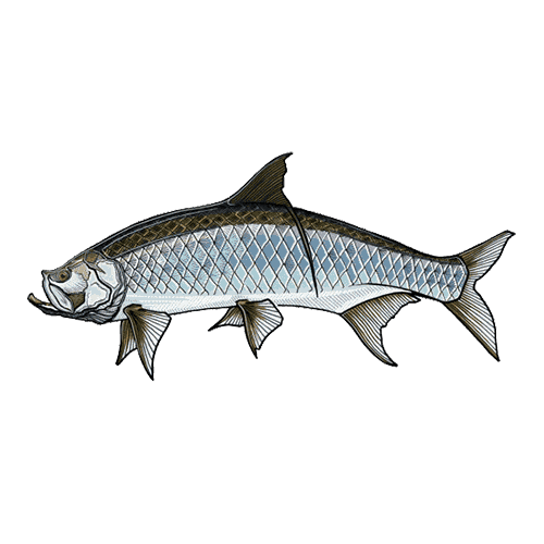 Casey Underwood Tarpon Fly Fishing Stickers And Decals