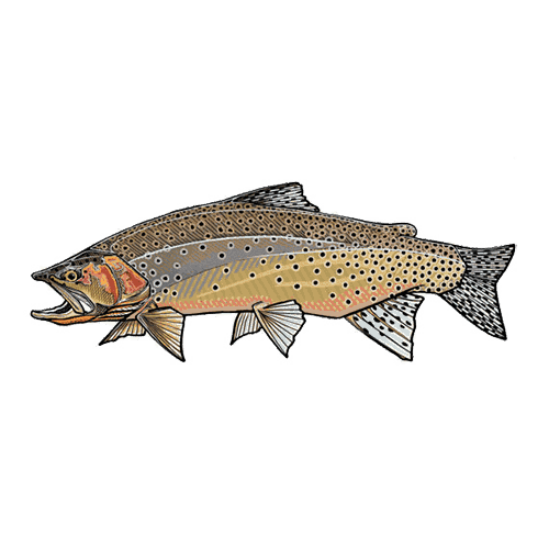 Casey Underwood Westslope Cutthroat
