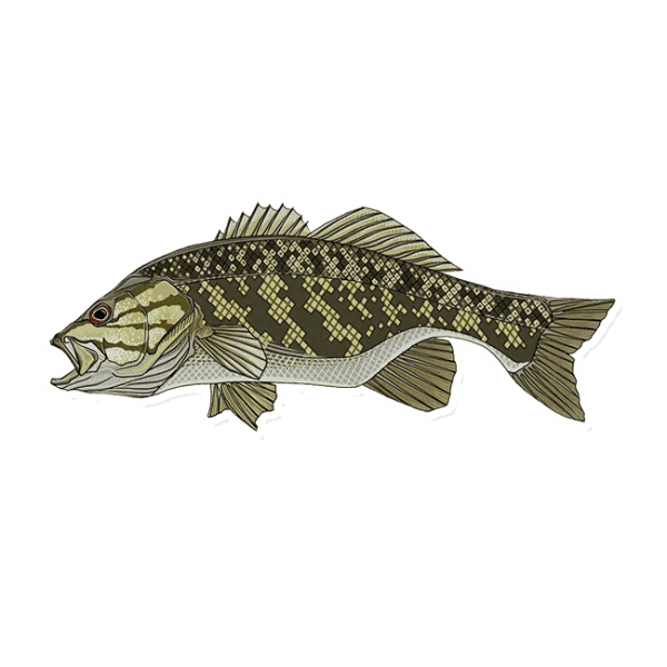 Casey Underwood Smallmouth Bass