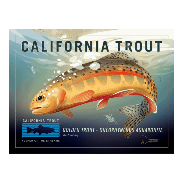 CalTrout.org Golden Trout Sticker