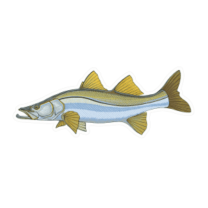 Casey Underwood Snook Sticker