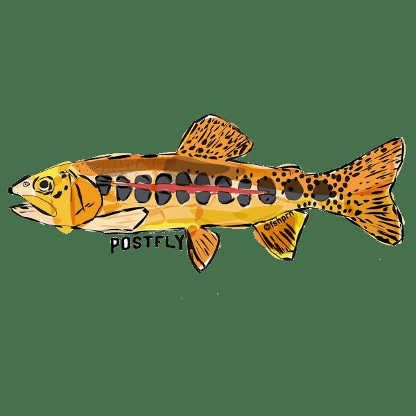 Postfly Golden Trout Sticker